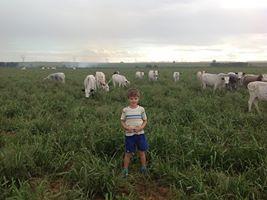 Eduard staan in sy oupa se aangeplante weiding en baie trots op die gewig wat die Nguni's optel. Foto twee is 'n bewys hoe vining herstel die gras as hy in kampe verdeel is.