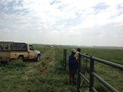 Gielie Nieuwoudt Bemarkingsdirekteur van Brazseed se daar is ook 'n verantwoordelikheid van die boer om hierdie gras reg te bestuur. Hier wys hy 'n 40 hektaar land wat in vier kampe verdeel is wat in 'n 10 dae siklus rotering is. Hier is 300 diere op hierdie droeland.